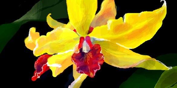 Жёлтая Орхидея