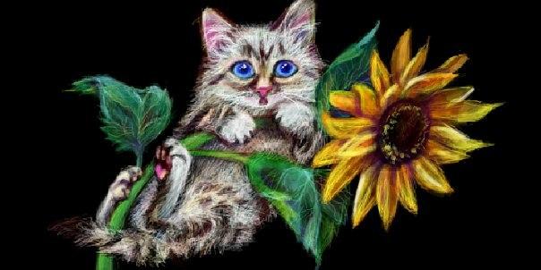 Кот на Подсолнухе